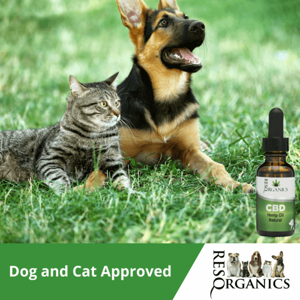 Dogs and Cats love CBD (and its benefits)