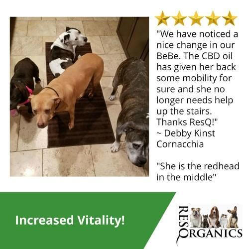 CBD For Canines 5 Star Review