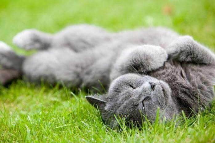 We would rather roll around in the grass too!