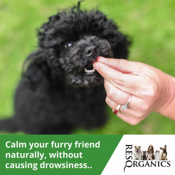 Calm your fur baby naturally.